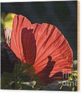 Hibiscus 10 Wood Print