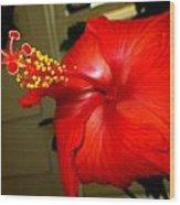 Hibiscus 12 Wood Print by M Landis