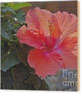 Hibiscus 2 Wood Print