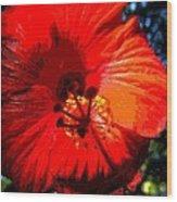 Hibiscus 2 Wood Print by Mark Malitz