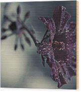 Hibiscus Acetosella Wood Print