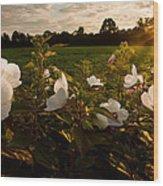 Hibiscus At Sunrise  Wood Print