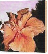 Hibiscus At Sunset Wood Print