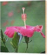 Hibiscus Ballerina Wood Print