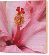 Hibiscus Flower Close Up Wood Print