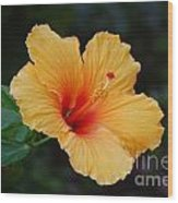 Hibiscus Flower In Puerto Rico Wood Print