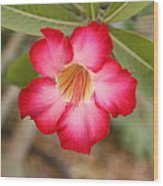 Hibiscus Flower Wood Print by Maeve O Connell