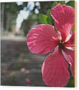 Hibiscus Wood Print by Frederico Borges