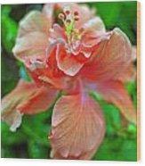 Hibiscus IIi Wood Print