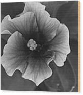Hibiscus In Black And White Wood Print