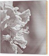Hibiscus In Sunlight Wood Print