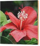 Hibiscus Le'a - A Large Red Hibiscus Flower Bloom Wood Print
