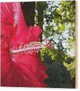 Hibiscus - Lord Baltimore Wood Print