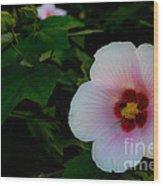 Hibiscus Mutabilis Flower Wood Print