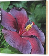 Hibiscus Night Fire Wood Print