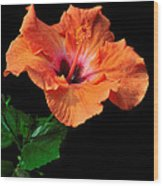 Hibiscus On Black - One Wood Print