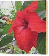 Hibiscus Red Wood Print