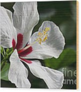 Hibiscus White Wings Wood Print