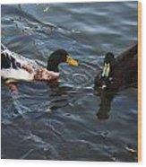 Hibred Ducks Swimming In Beech Fork Lake Wood Print
