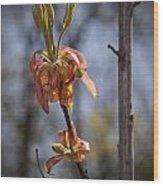 Hickory Bloom Wood Print