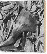 Hidden Conch Wood Print
