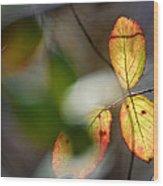 Hidden Forest Leaves Wood Print