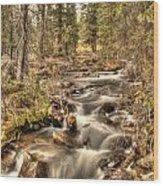 Hidden Forest Treasure Wood Print