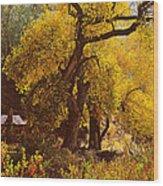 Hidden In The Trees Wood Print
