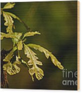 Hidden Leaves With A Green Back Ground Wood Print by Robert D  Brozek