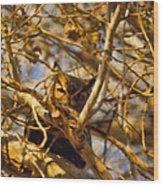 Hidden Owl Wood Print