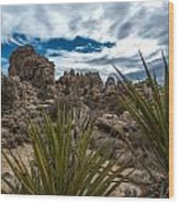 Hidden Valley Yuccas Wood Print