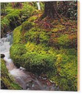Hidden Woodland Corner. Benmore Botanical Garden. Scotland Wood Print