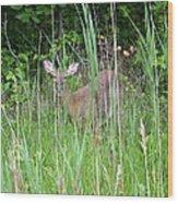 Hiding Deer Wood Print