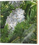 Hiding Hydrangea Wood Print