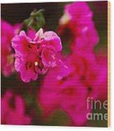 Hiding In Pink Wood Print
