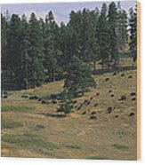 High Angle View Of Bisons Grazing Wood Print