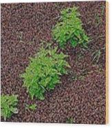 High Contrast Plantlife Wood Print