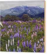 High Country Lupine Dreams Wood Print