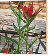 High Country Wildflowers Wood Print