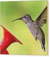 High Flying Hummingbird Wood Print