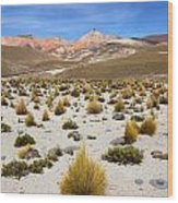 High In The Chilean Altiplano Wood Print
