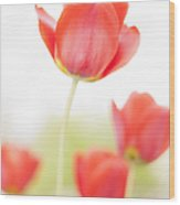 High Key Tulips Wood Print