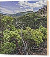 High Peaks Trail View Wood Print