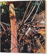 High Rise Fungi Wood Print