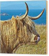 Highland Beauty Wood Print