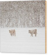 Highland Cattle In The Snow Wood Print