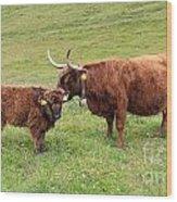 Highland Caws Wood Print