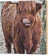 Highland Coo Wood Print