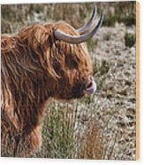 Highland Coo With Tongue In Nose Wood Print