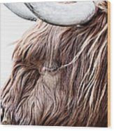 Highland Cow Color Wood Print
